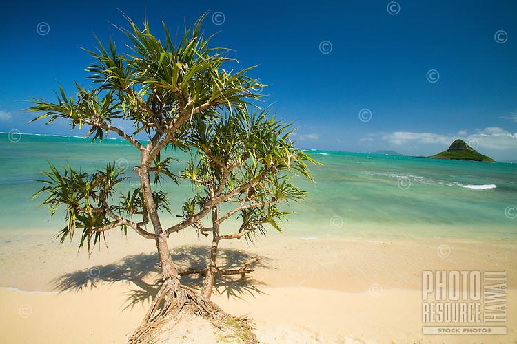 Beach scene with Chinaman's Hat, Kualoa Regional Park, East Side of Oahu
