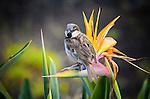 Bird of Paradise ... and a Bird at Pearl Harbor, Honolulu, Hawaii