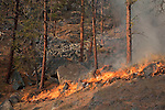 Prescribed fire in ponderosa pine forest in fall on Sinlahekin Wildlife Area in Okanogan County, WA..Treatment unit is Conner 5, which had been logged and thinned in winter prior.  Note hose lay at top of photo placed to keep fire from burning through talus rock on to Washington DNR land.