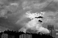 A member of the Police Rescue team, with his dog attached, rappel down in the air during a public demonstration of the Police forces in Quito, Ecuador, 4 March 2012.