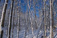 Winter snowfall in forest<br />