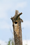 Nest cavity