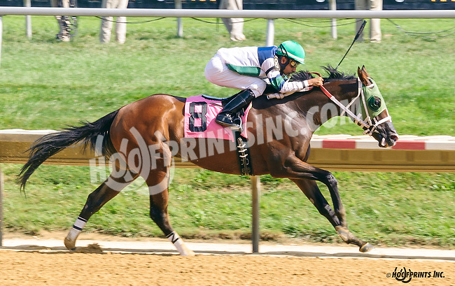 Runninginthevale winning at Delaware Park on 8/24/16