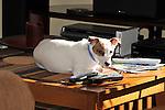 Emma on living room coffee table.
