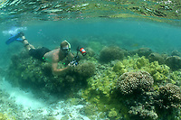 Reasearcher documenting coral reef with digital camera, Maro reef, Papahanaumokuakea Marine National Monument, Northwestern Hawaiian Islands, Hawaii, USA, Pacific Ocean