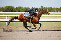 #66Fasig-Tipton Florida Sale,Under Tack Show. Palm Meadows Florida 03-23-2012 Arron Haggart/Eclipse Sportswire.