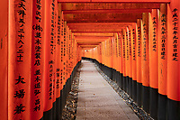 Miles and miles of walkways comprised of many individual gates in the Fushimi Inari Shrine in Koyoto.