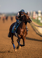 October 04 2018 : Oscar Performance gallops at Keeneland Racecourse on October04, 2018 in Lexington, Kentucky. Evers/ESW/CSM