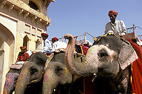 India, Rajasthan, Jaipur, Amber Fort, elephants & riders