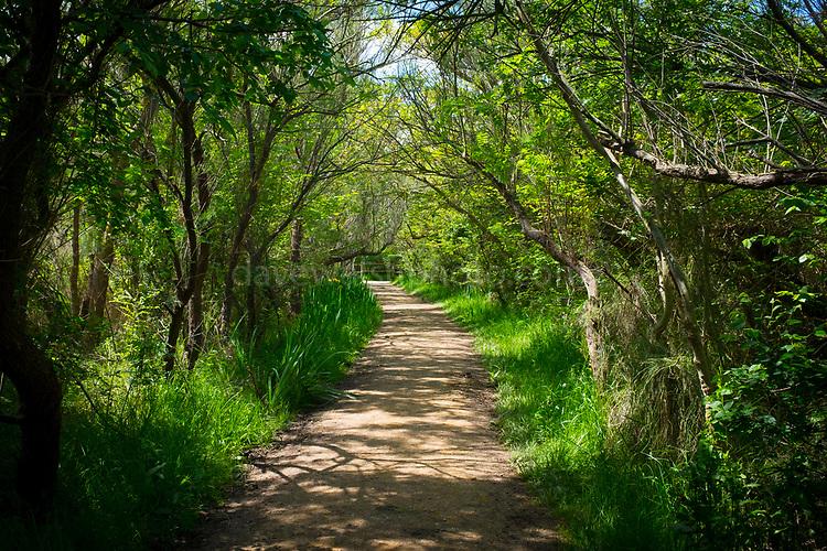 Near Estany del Cortalet, Aiguamolls de l'Empordà Natural Park, the 2nd most important wetland area in Catalonia.