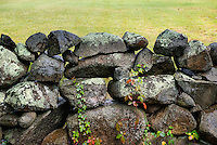 Stone fence, Martha's Vineyard, Massachusetts, USA