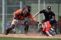 Baltimore Orioles Alex Murphy (65) swipes the tag as Mike Meyers (2) slides home during a minor league spring training game against the Boston Red Sox on March 18, 2015 at the Buck O'Neil Complex in Sarasota, Florida.  (Mike Janes/Four Seam Images)