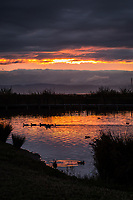 The setting sun lights the clouds with golden light that reflects on the water of a lagoon aptly called, The Duck Pond.