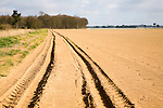 To be captioned after editing Track crossing sandy fields of farmland on Suffolk Sandlings, Alderton, Suffolk, England