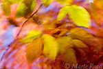 Abstract pattern of colorful leaves in autumn, Ithaca, New York, USA