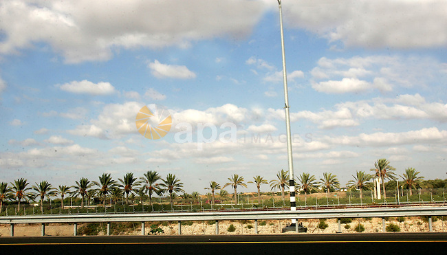 Palmtress are seen in the city of Alramla on Oct. 25, 2010. Photo by Mahfouz Abu Turk
