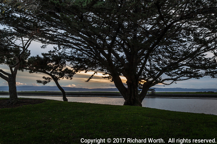 Sunset paints a single brush stroke behind a series of trees in silhouette at the San Leandro Marina Park along San Francisco Bay.