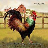GIORDANO, STILL LIFE STILLLEBEN, NATURALEZA MORTA, paintings+++++,USGI2737,#I# rooster