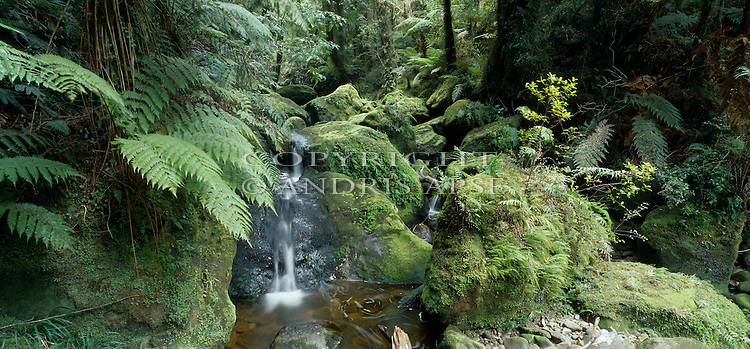 Stafford River. Westland National Park. New Zealand.