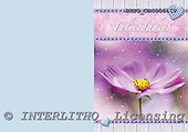 Alfredo, FLOWERS, paintings, BRTOCH40561CP,#F# Blumen, flores, illustrations, pinturas