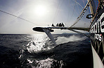 Onboard l'Hydroptère DCNS Alain Thébault and his crew (Yves Parlier, Jean le Cam, Jacques Vincent, Luc Alphand)  during the first series of trials on the Med before trying to beat the Pacific crossing record between Los Angeles and Honolulu next summer. La Ciotat in the Bouches-du-Rhône, Provence-Alpes-Côte d'Azur, France. ( http://hydroptere.com/news/466/98/Cordee-de-legende/ ) .