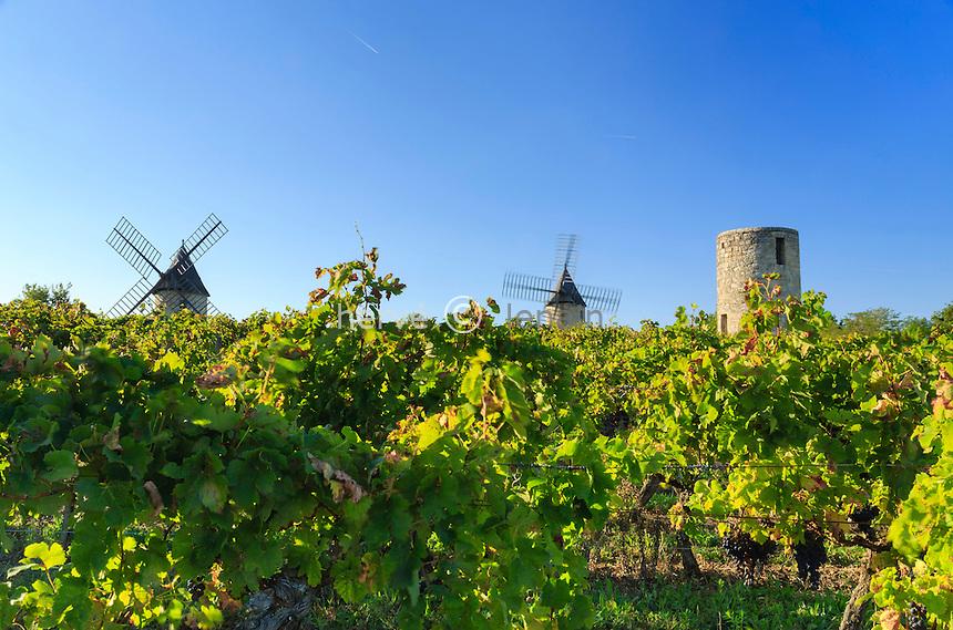 France, Gironde (33), Montagne, les Moulins de Calon et le vignoble en appellation Montagne Saint-Emilion // France, Gironde, Montagne, Moulins de Calon and the vineyard appellation Montagne Saint Emilion