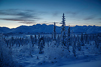 Winter landscape of a crescent moon rise at dawn over the Chugach Mountains and spruce tree forest in the Eureka area in Southcentral, Alaska   January 2016