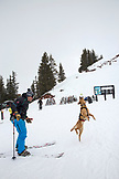 USA, Colorado, Aspen, an avalanche dog jumps to catch a ball outside of the Ski Patrol Hut, Aspen Highlands Ski Resort