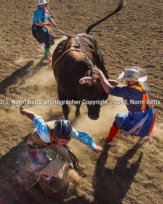 RAM Rodeo at the International Plowing Matches in Finch, Ontario, Canada <br /> <br /> normbetts@canadianphotographer.com<br /> 416 460 8743<br /> <br /> &copy;2015norm betts, photog RAM Rodeo Tour, at the International Plowing Match outside the village of Finch, Ontario, Canada.