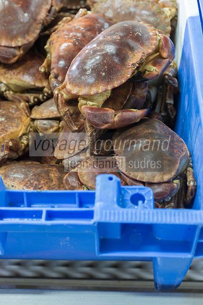 France, Bretagne, (29), Finistère,  Le Guilvinec: Le port de pêche, la criée