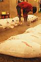 File photo - Frozen Tunas , Sep 5th 2008 : In the early morning, fishermen starts selling their fresh fish at the fish market in Tsukiji, Japan. (Photo by Takuya Matsunaga/AFLO)