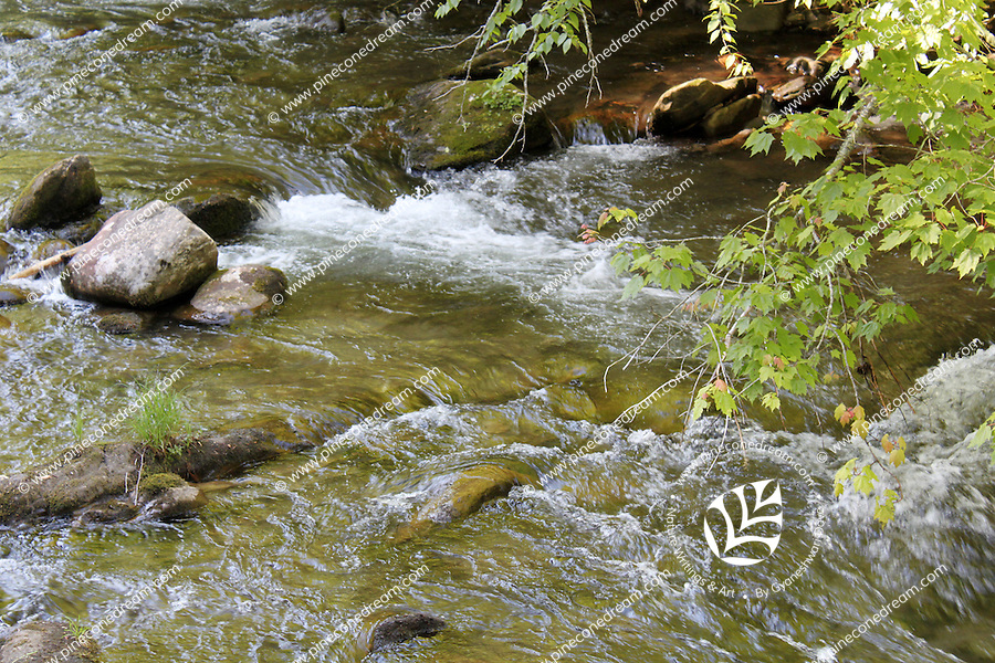 Stock image of a stream of little river flowing through the great smoky mountain national park.
