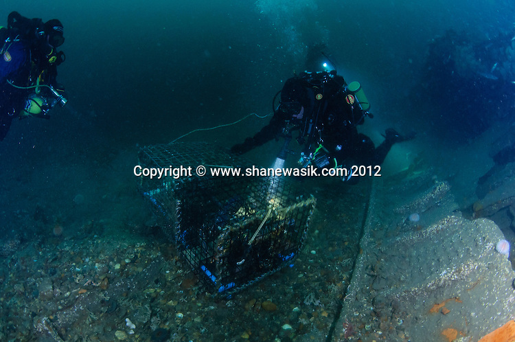 An abandoned creel was found tangled in the wreckage still ghost fishing and the divers released the marine life still caught in the creel.