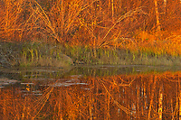 Reflection in pond at sunset<br />