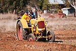 Antique tractors plowing a field in fall during the Branch 158 EDGE & TA Fall Plow Day and Plowing Seminar near Pleasant Grove, Calif...Silmer Scheidel Farm..Mid 1950s Minneapolis-Moline Mod. Z tractor pulling 2-bottom plow