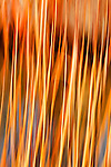 Abstract of river reeds with colorful background