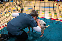Elementary School Principal Kisses a Pig for Charity Park Ridge Illinois 11-1-19