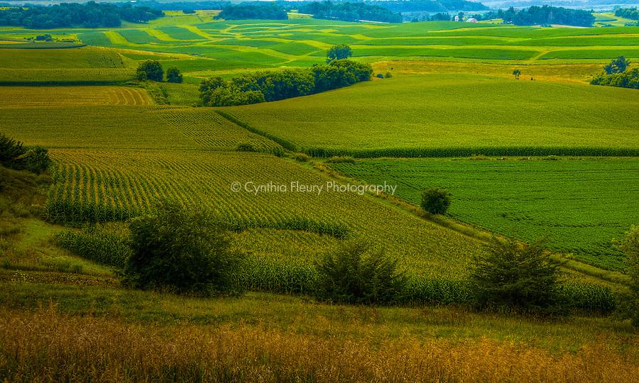 Lanesboro Harmony Summer Minnesota Farmland Corn