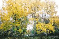 Image Ref: DR015<br /> Location: RJ Hamer Arboretum<br /> Date: 13th April 2014