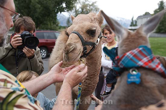 Cosmo the camel met Oscar the kangaroo as Chaplain David Pascoe (left) blessed animals at Silverado Senior Living Saturday, October 3 2009 in Salt Lake City. At right is Noralyn Snow. jeff allred