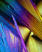 UREA CRYSTALS - H2NCONH3<br /> Product of protein metabolism; Tetragonal prisms; 100x mag. liquefied &amp; recrystallized; polarized light.