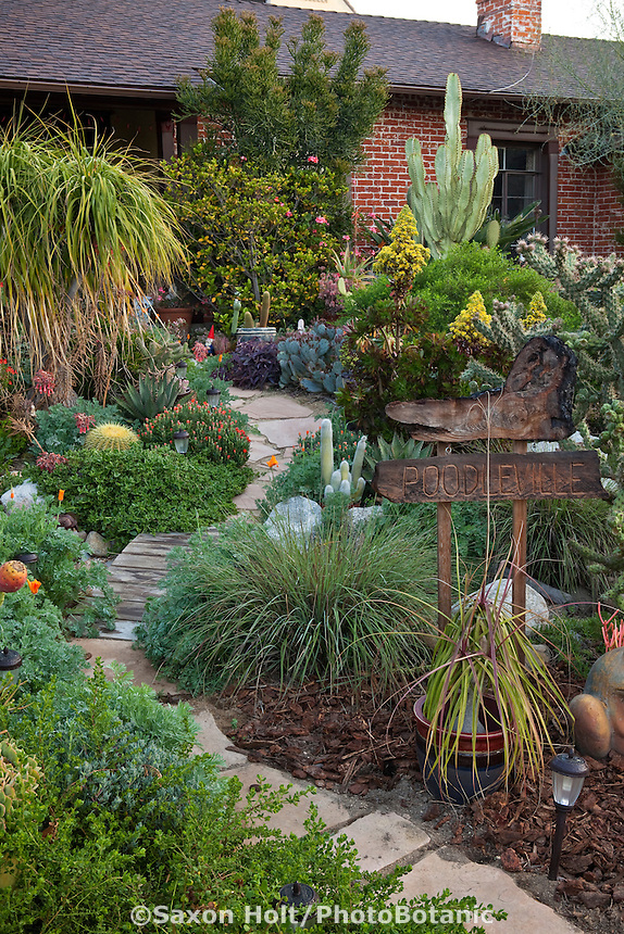 Stepping stone path in front yard drought tolerant Los Angeles, California small space plant collector garden, with native plants