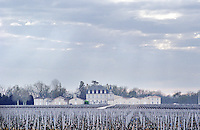 Vineyard. Chateau Grand Puy Lacoste, Pauillac. Medoc, Bordeaux, France