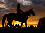 LOUISVILLE, KENTUCKY - APRIL 27: A horse heads to the track as horses prepare for the Kentucky Derby and Kentucky Oaks at Churchill Downs in Louisville, Kentucky on April 27, 2019. Scott Serio/Eclipse Sportswire/CSM