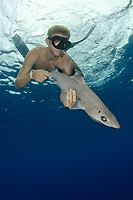 gulper shark, Centrophorus granulosus, and diver, Cape Eleuthera, Bahamas, Atlantic Ocean