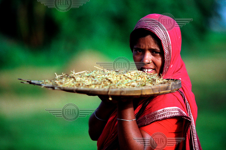 A woman prepares to separate rice from husks using a traditional sieving implement.
