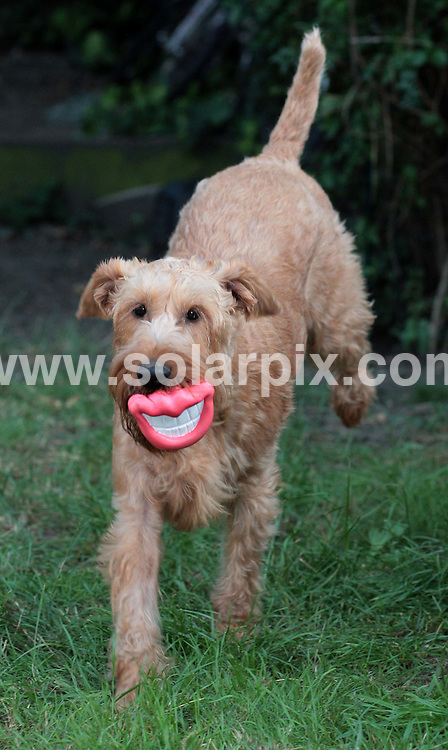 **ALL ROUND PICTURES FROM SOLARPIX.COM**.**NO UK NEWSPAPER PUBLICATION **UK MAGAZINE & SUPPLEMENT PUBLICATION ONLY** AND NO PUBLICATION IN FRANCE, SCANDINAVIA, AUSTRALIA AND GERMANY** .The latest dog toy to hit the market is the Doggy Hoots Grinning Dog Lips.Made by US firm Fat Cat Inc, the hysterical new fetch toy for dogs is made from non-toxic rubber and brings a smile to everyone's lips when out for a walk..JOB REF:6934-SFE       DATE:30_07_08 .**MUST CREDIT SOLARPIX.COM OR DOUBLE FEE WILL BE CHARGED* *UNDER NO CIRCUMSTANCES IS THIS IMAGE TO BE REPRODUCED FOR ANY ONLINE EDITION WITHOUT PRIOR PERMISSION*