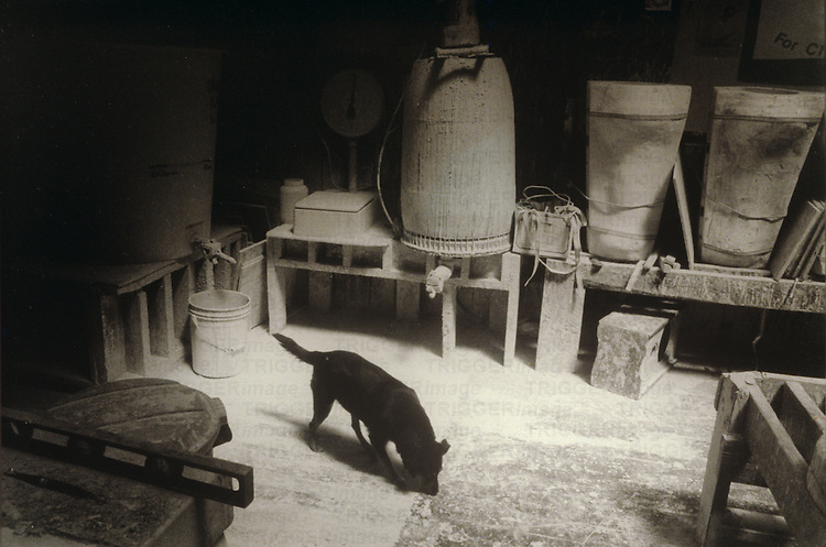 dog in foundry