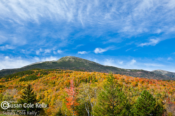 Fall foliage on Mount Washington seen from  Pinkham Notch in the White Mountain National Forest, NH, USA