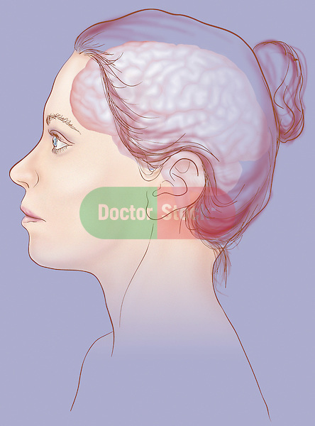 see-thru illustration of woman's brain brain; central nervous system, anatomy